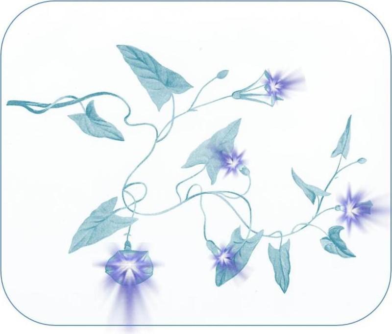 Цветок для СК