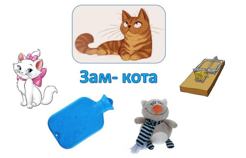 Зам-кота